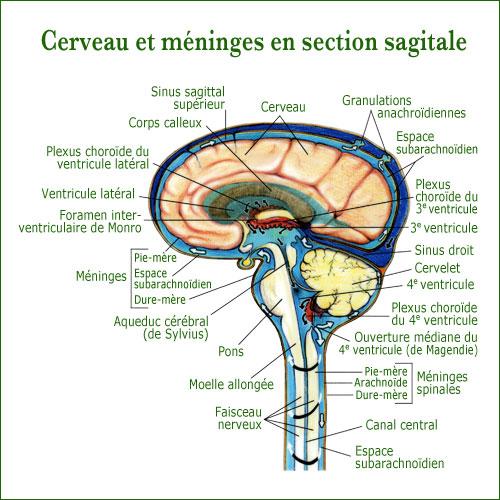 Thérapie Crânio-Sacrée