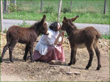 eft et communication animale